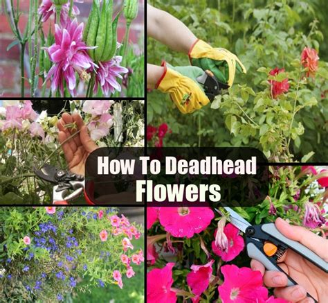 how to deadhead flowers diy cozy home world home improvement and garden tips