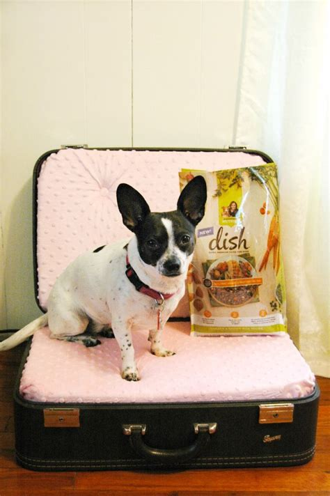 suitcase dog bed 25 best ideas about suitcase dog beds on pinterest