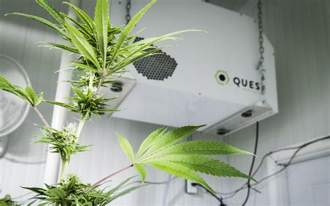 grow room humidity control  tips  indoor growers leafly