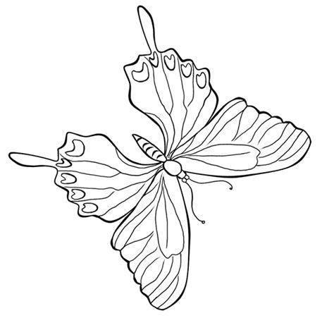 mewarnai kupu kupu 14 alamendah s