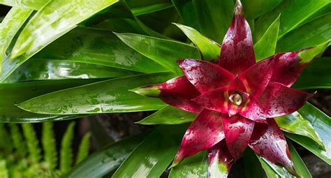 top 5 plants that thrive in the shade better homes and