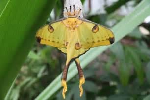p 228 iperleksgaart jardin des papillons visit luxembourg