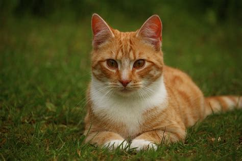 cat pictures your lawns could be harming your cats