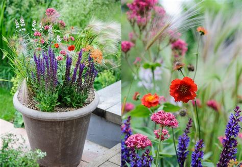 container gardening magazine uk ideas home inspirations