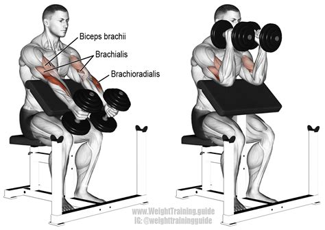 bench press with ez curl bar dumbbell hammer preacher curl exercise instructions and video
