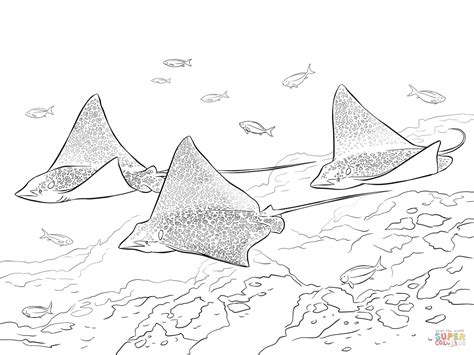 coloring pages sharks and rays spotted eagle rays coloring page free printable coloring
