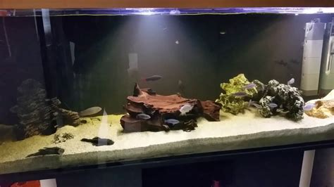 Aquarium Ohne Pflanzen Einrichten 6848 by Ohne Pflanzen