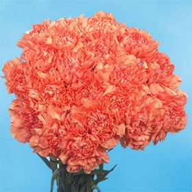 how to keep flowers fresh overnight 100 orange carnations next day retailrium online