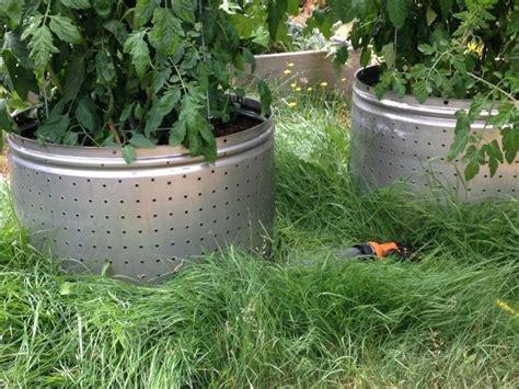 Tomato Planters Ideas by Washing Machine Tub Tomato Planters Thriftyfun
