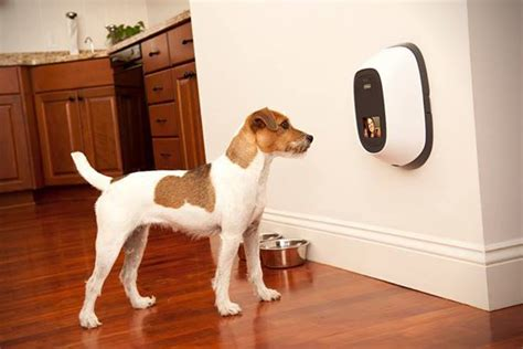 petchatz facetime phone for dogs hiconsumption
