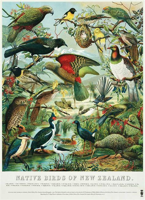 printable art nz native birds of nz poster
