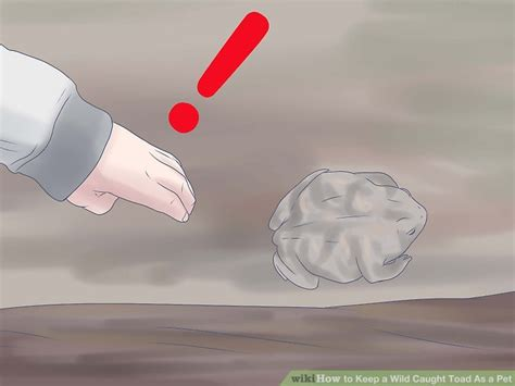 how to catch a toad in your backyard the easiest way to keep a wild caught toad as a pet wikihow
