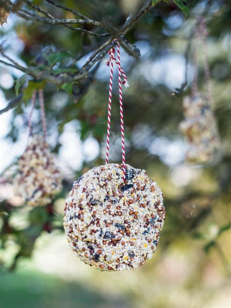 kids craft bird seed christmas ornaments hgtv
