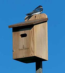 swallow house plans pdf diy bird house plans tree swallows download bookshelf do it yourself plans