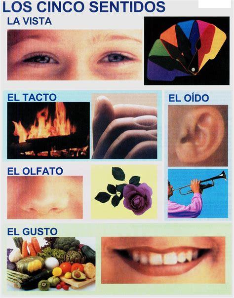 laminas educativas los 5 sentidos laminas escolares lamina los cinco sentidos