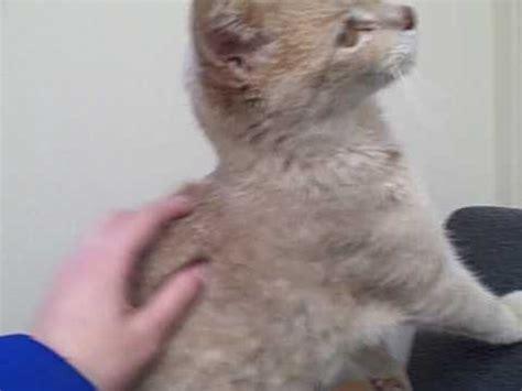 sweet cat with broken leg needs help youtube
