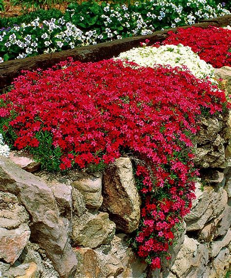 304 best rock gardens ground covers images on pinterest