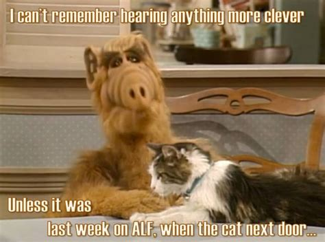 Alf Meme - golden girls meme clever alf cat golden girls memes