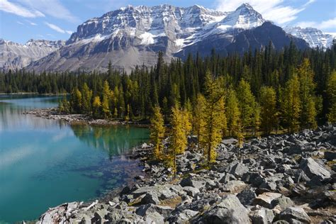 golden glow of the golden glow of the larches lake o hara