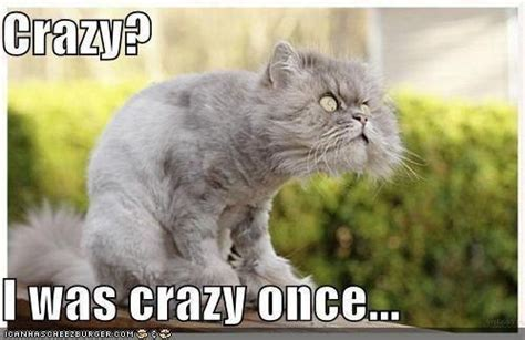 Crazy Cat Man Meme - crazy cat memes image memes at relatably com