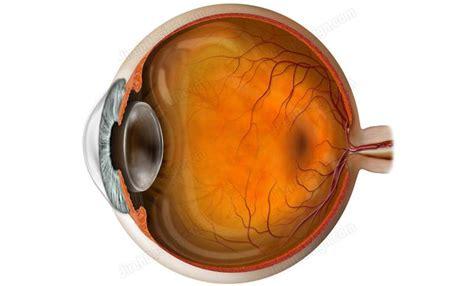 eyeball cross section eyeball cross section anatomy illustration an0005a