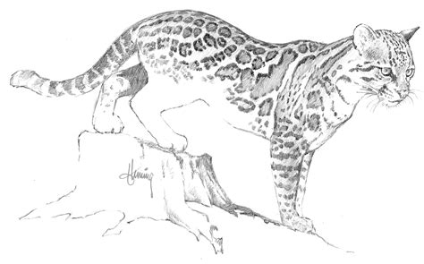How To Draw Ocelots Ocelot Coloring Page
