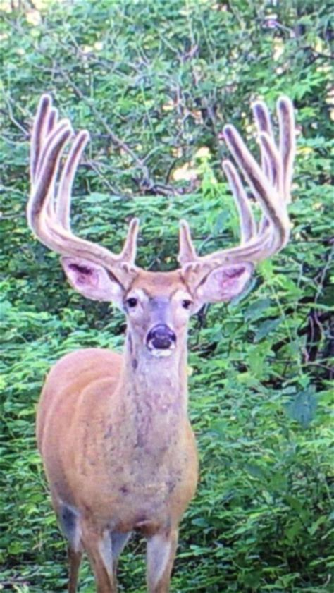 Records In Wisconsin Is The New World Record Whitetail Walking In Wisconsin Big Deer