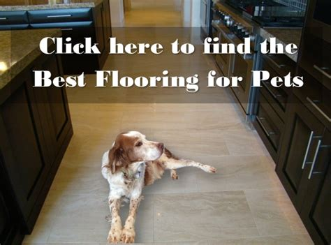 Best Flooring For Pets Pet Owners Care Resource Durango