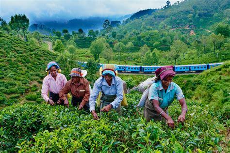 Ceylon Srilanka sri lanka l antica ceylon viaggi tribali