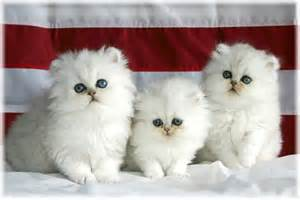 sujith spot cute kittens and beautiful puppies