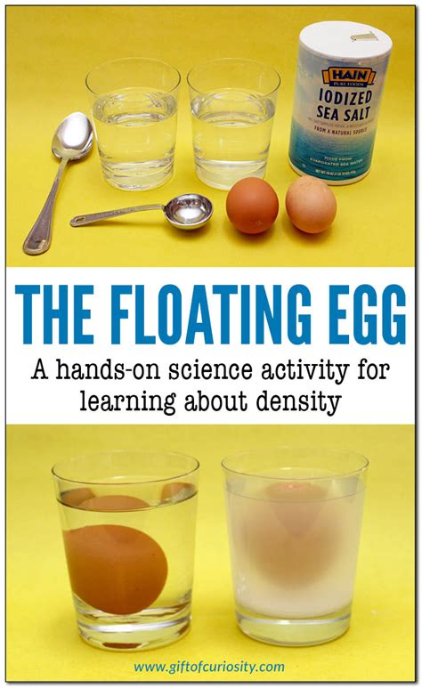 Egg Sinks In Water by The Floating Egg On Density Experiment Gift Of
