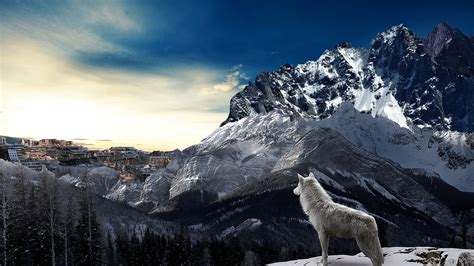 wolf with free illustration wolf nature mountain free image on