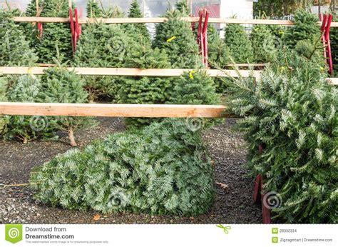 christmas tree sales yard stock photo image of xmas