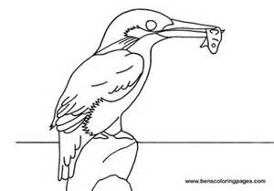 kingfisher coloring coloring pages