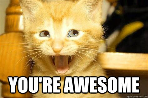You Re Awesome Meme - you re awesome awesome cat quickmeme