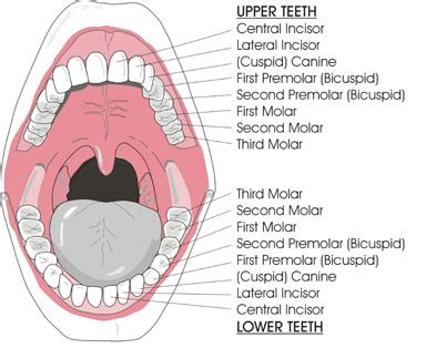 tooth and mouth illustrations