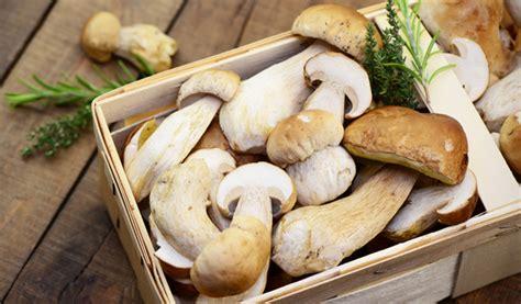 wann pilze sammeln pilze sammeln maronen steinpilze und co chefkoch de
