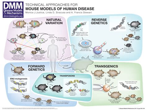 Disease Models And Mechanisms technical approaches for mouse models of human disease
