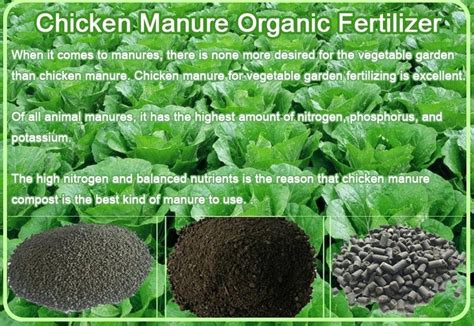 vegetable garden fertilizer tfastl