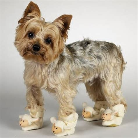 boots for yorkies small slippers shoes chihuahua poodle yorkie shih tzu