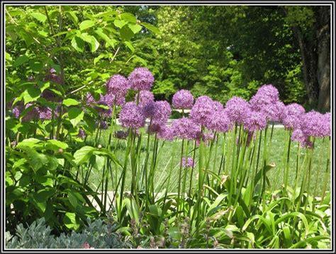botanischer garten linz botanischer garten linz orchideen garten house und