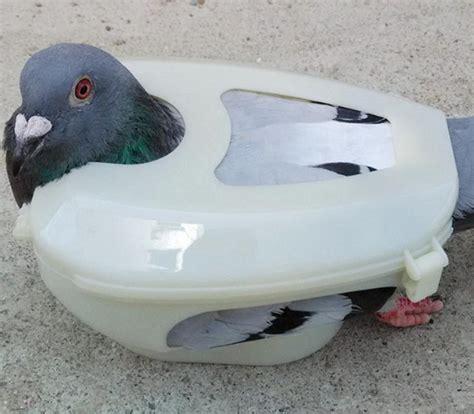pigeon holder promotion shop for promotional pigeon holder