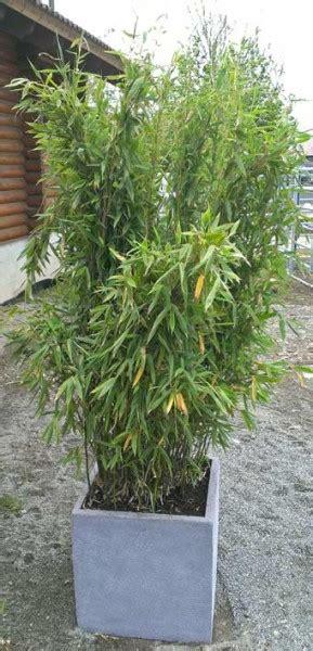 Palme Für Garten by Dekor Pflanzen Balkon