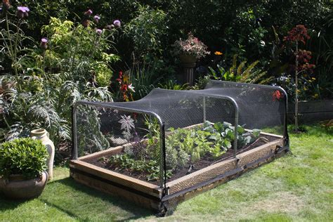 raised bed garden bird netting gardening outdoors