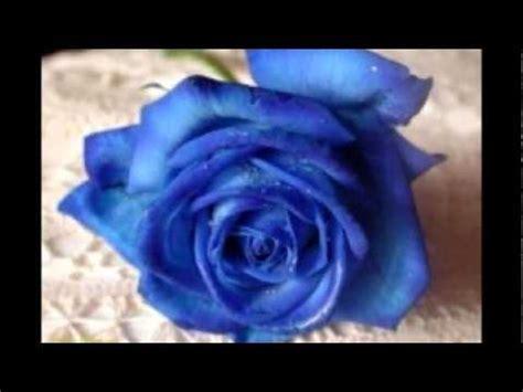 Standar Bunga Mawar bunga mawar