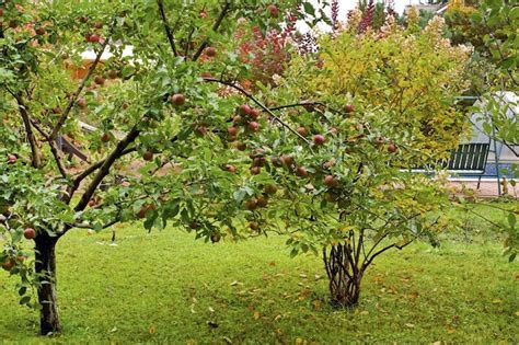 24 delicious backyard fruit tree ideas