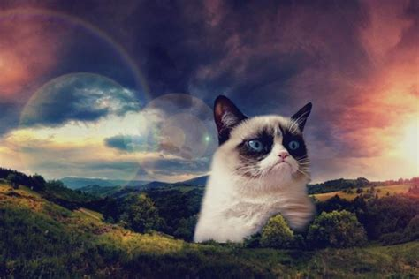 grumpy cat wallpaper iphone grumpy cat wallpaper 183 download free stunning hd