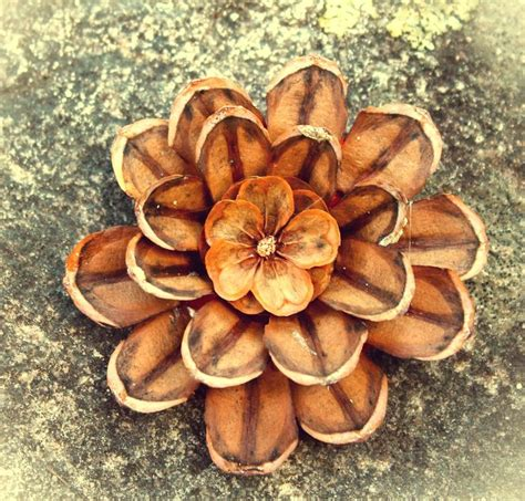 pine cone crafts twig and toadstool pine cone flowers craft
