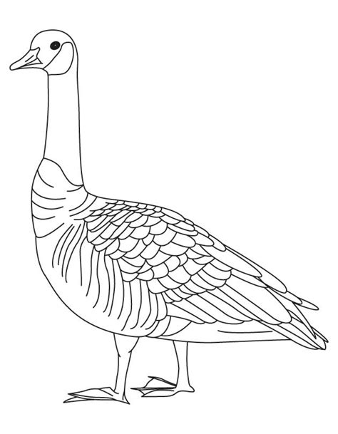 barren goose coloring page download free barren goose