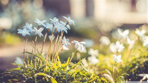 spring wallpaper hd tumblr beautiful spring flowers 895054 walldevil